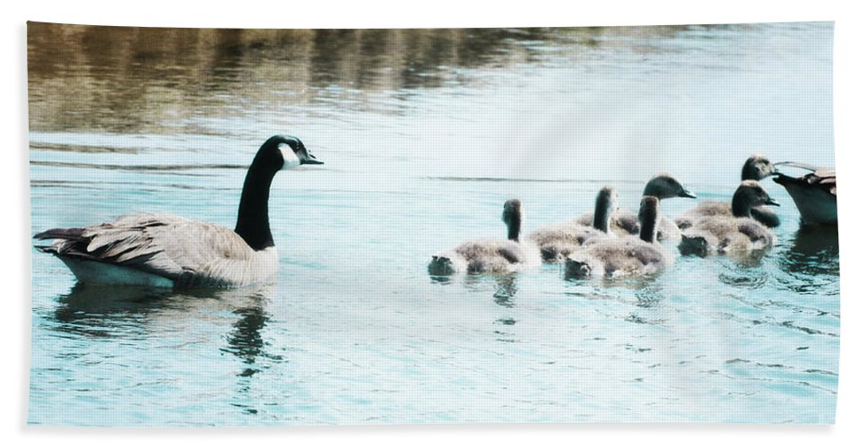 Canada Bath Sheet featuring the photograph Canada Geese Family by Jim And Emily Bush