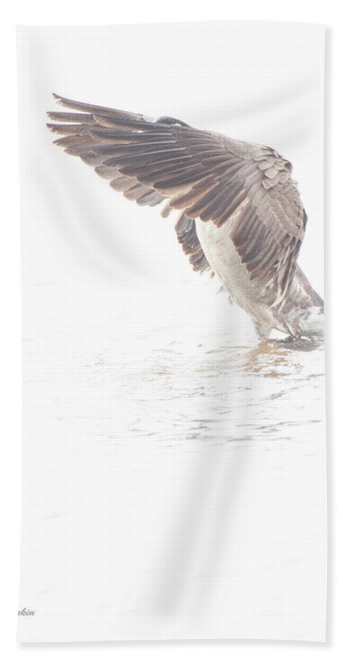 Canada Goose Hand Towel featuring the digital art Canada Goose Fans Its Wings by A Gurmankin