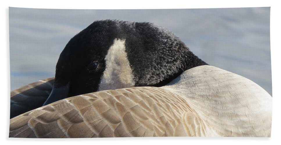 Nature Hand Towel featuring the photograph Canada Goose Head by Mary Mikawoz