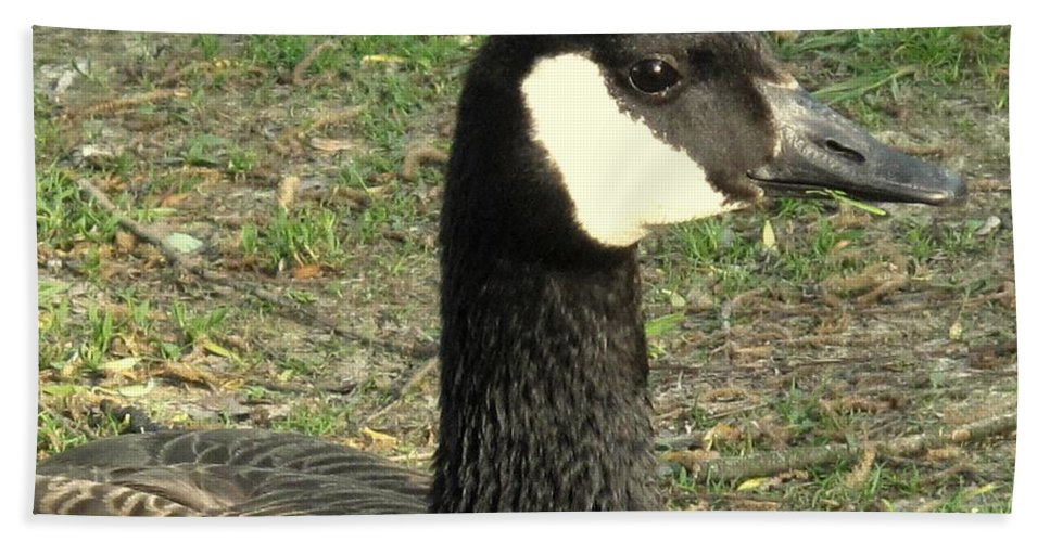 Canada Hand Towel featuring the photograph Canada Goose by Ian MacDonald