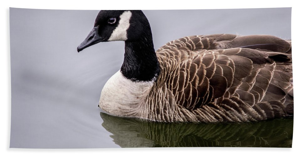 Canadian Goose Bath Sheet featuring the photograph Canadian Goose At Rio by Don Johnson