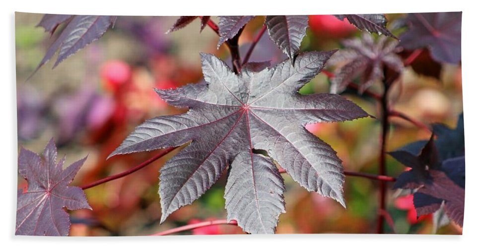 Canada Bath Sheet featuring the photograph Canadian Leaf by Gayle Miller