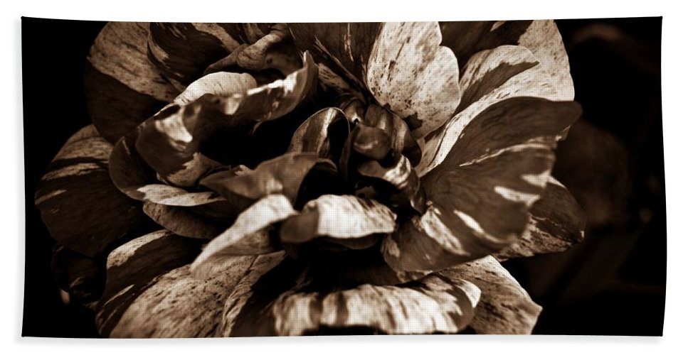 Candy Stripe Rose Sepia Hand Towel featuring the photograph Candy Stripe Rose Sepia by Chalet Roome-Rigdon
