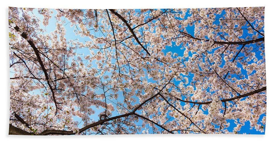 Cherry Blossom Festival Hand Towel featuring the photograph Canopy Of Cherry Blossoms by SR Green