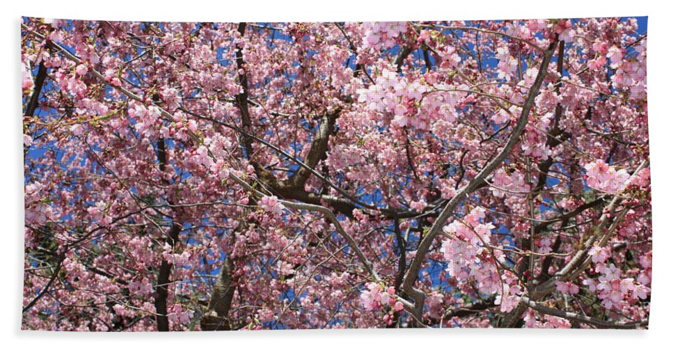 Canvas Of Pink Blossoms Bath Sheet featuring the photograph Canvas Of Pink Blossoms by Carol Groenen