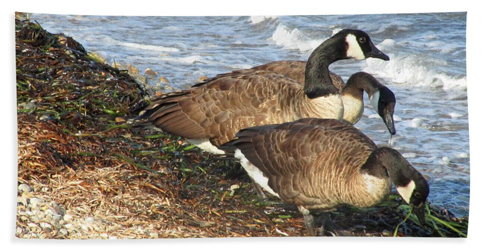 Canada Geese Bath Sheet featuring the photograph Cape Cod Beachcombers 1 by Mark Sellers