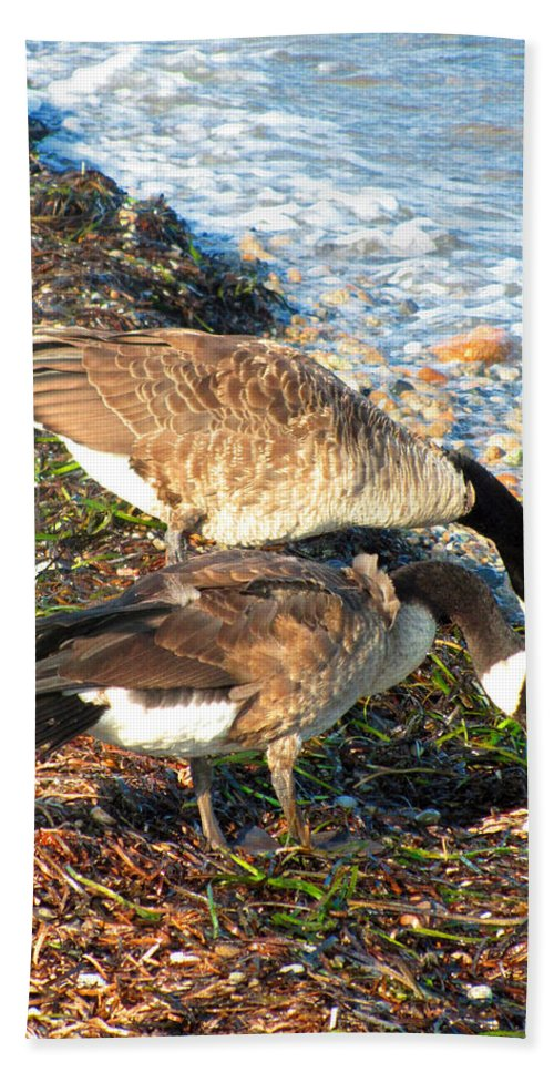 Canada Geese Bath Sheet featuring the photograph Cape Cod Beachcombers 2 by Mark Sellers