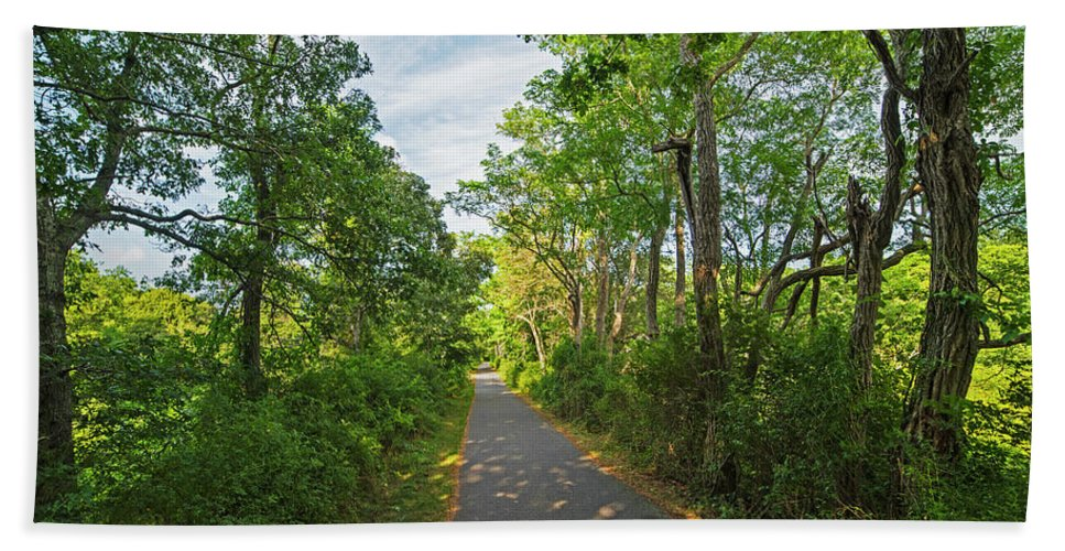 Cape Hand Towel featuring the photograph Cape Cod Rail Trail Trees Eastham Ma 2 by Toby McGuire