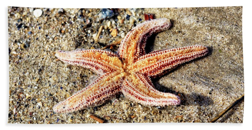 Starfish On The Beach Hand Towel featuring the photograph Cape May Starfish by John Rizzuto