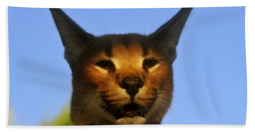 Caracal Hand Towel featuring the photograph Caracal Portrait by David Lee Thompson