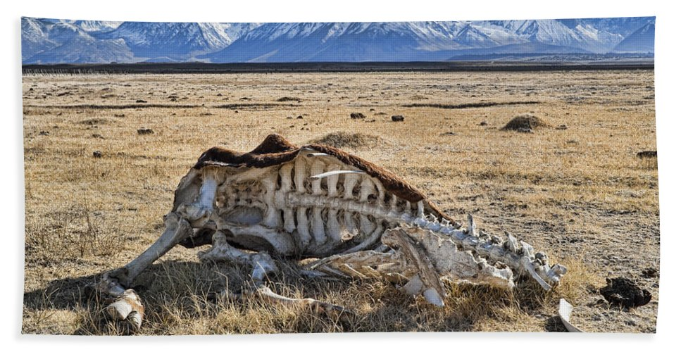 Nature Bath Sheet featuring the photograph Carcass With A View by Kelley King