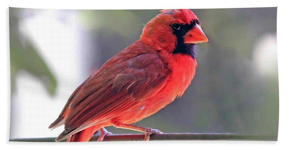 Cardinal Hand Towel featuring the photograph Cardinal by Angela Murdock