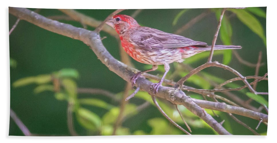 Cardinal Hand Towel featuring the photograph Cardinal Bird In The Wild In South Carolina by Alex Grichenko