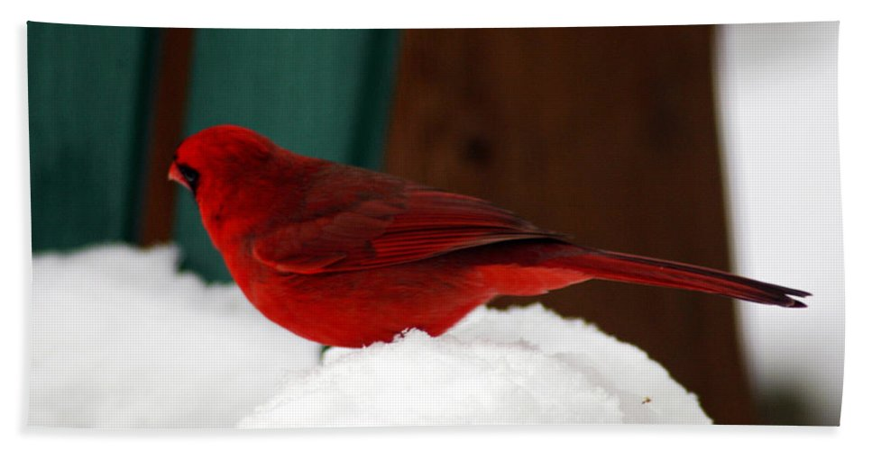 Clay Hand Towel featuring the photograph Cardinal In Snow II by Clayton Bruster