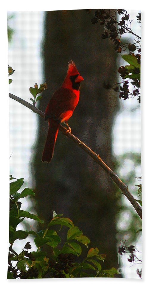 Cardinal Bath Sheet featuring the photograph Cardinal In The Crepe Myrtle by Carol Groenen