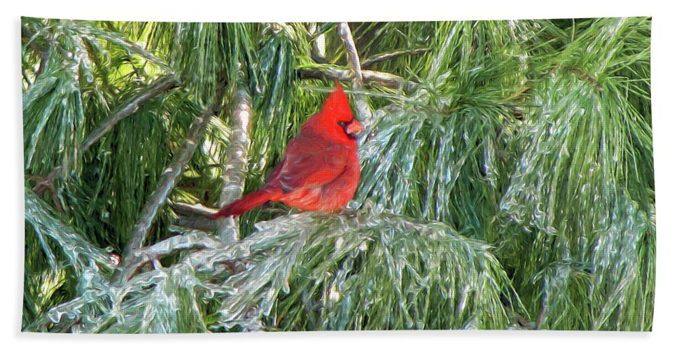 Cardinals Bath Sheet featuring the photograph Cardinal On Ice by John Freidenberg