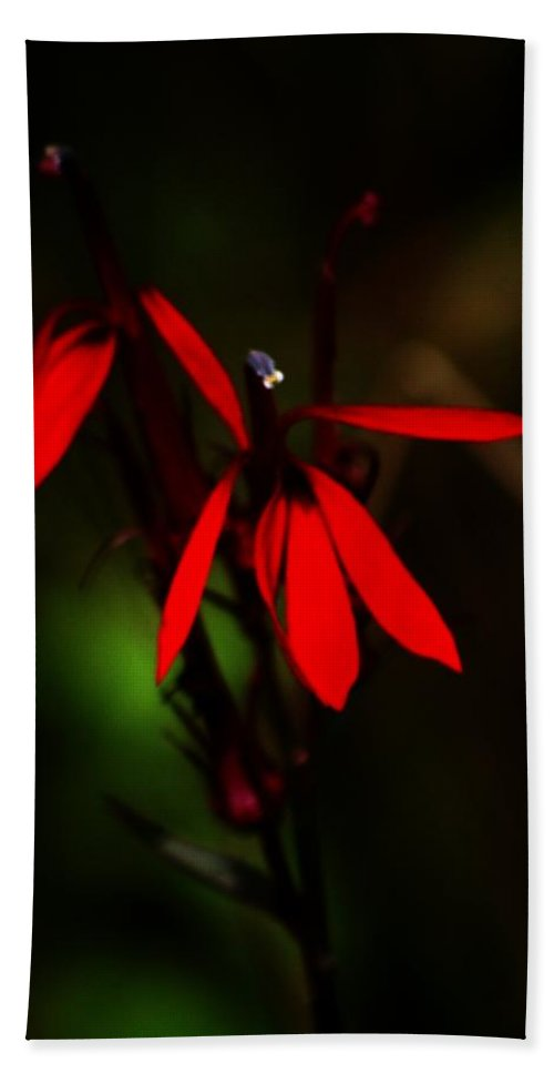 Digital Photograph Hand Towel featuring the photograph Cardinal Plant by David Lane
