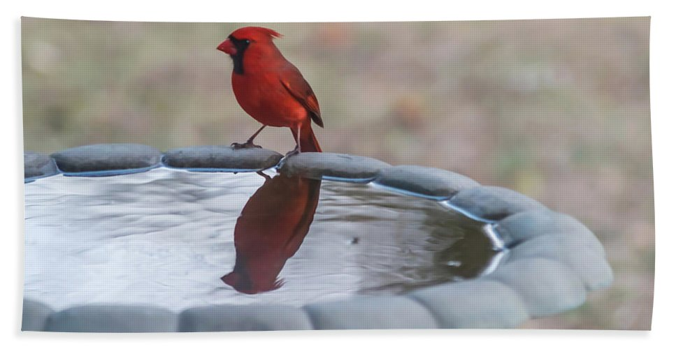 Terry Deluco Bath Towel featuring the photograph Cardinal Reflection by Terry DeLuco