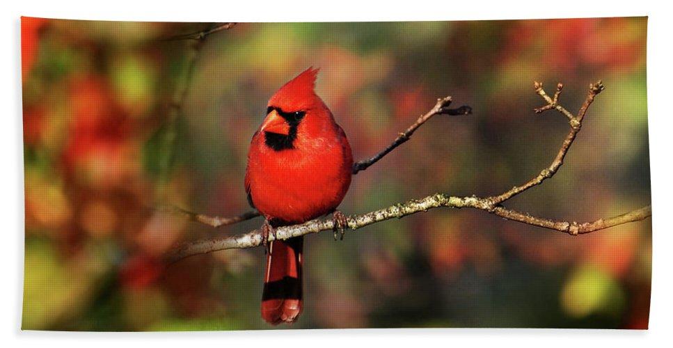 Bird Bath Sheet featuring the photograph Cardinal Territory by Christina Rollo