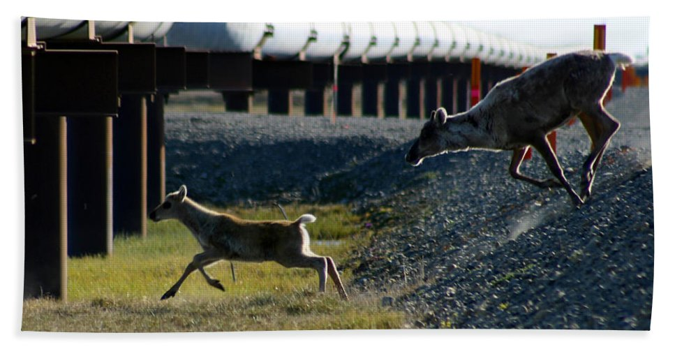 Caribou Hand Towel featuring the photograph Caribou Cow And Fawn by Anthony Jones