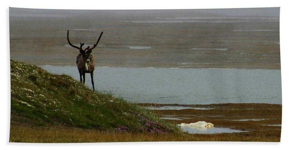 Caribou Bath Towel featuring the photograph Caribou Fog by Anthony Jones