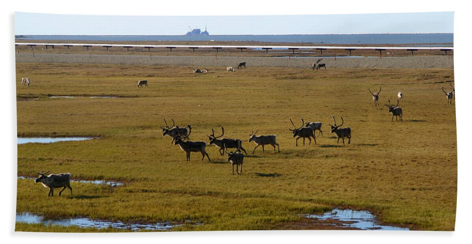 Caribou Bath Towel featuring the photograph Caribou Herd by Anthony Jones