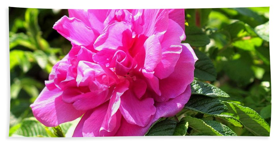 Rose Hand Towel featuring the photograph Carmen by Ian MacDonald