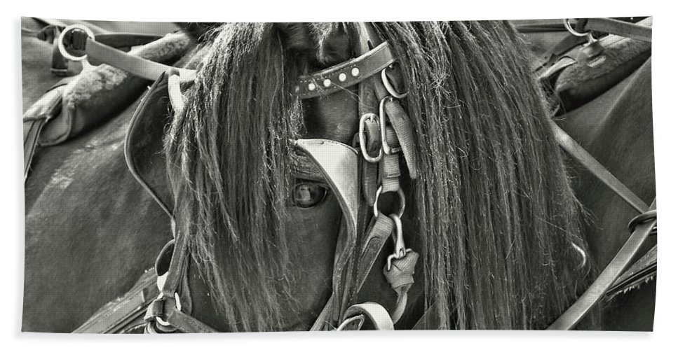 Horse Bath Sheet featuring the photograph Carriage Horse Beauty by JAMART Photography