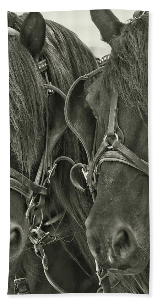 Horse Bath Sheet featuring the photograph Paired Carriage Ponies by JAMART Photography