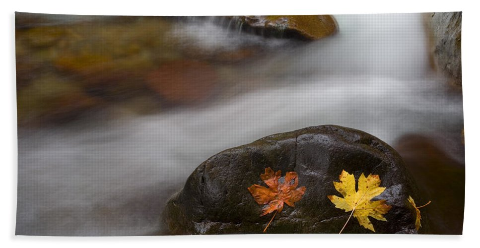 Leaves Bath Towel featuring the photograph Castaways by Mike Dawson