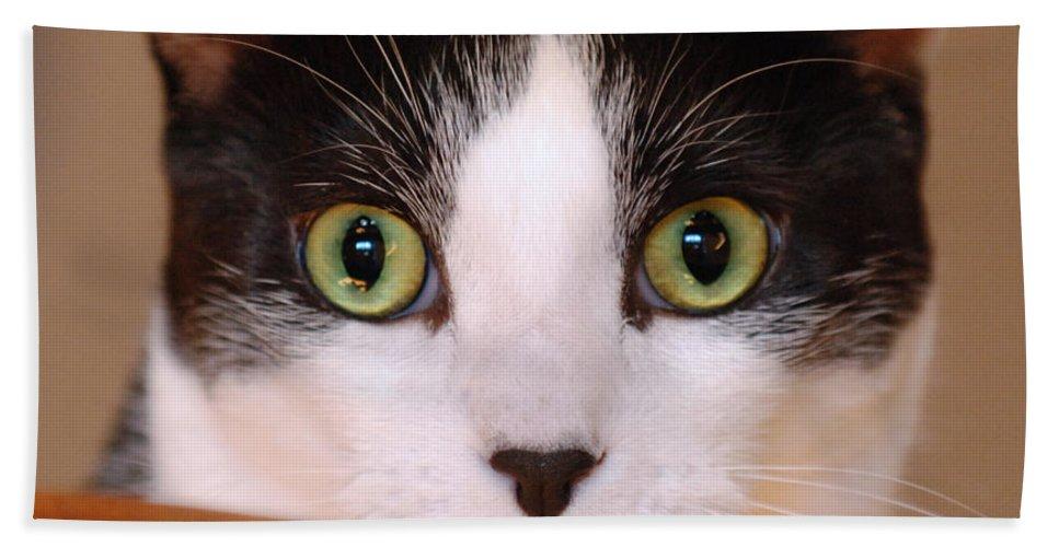 Pet Bath Sheet featuring the photograph Cat Eyes by Jill Reger