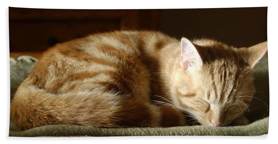 Cat Hand Towel featuring the photograph Cat Nap by David Lee Thompson