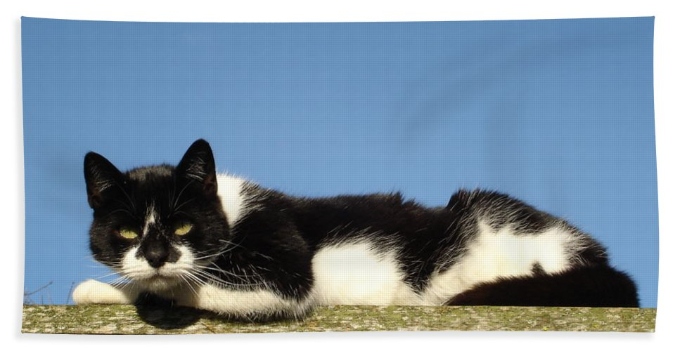 Cat Bath Sheet featuring the photograph Cat On The Roof by Susan Baker