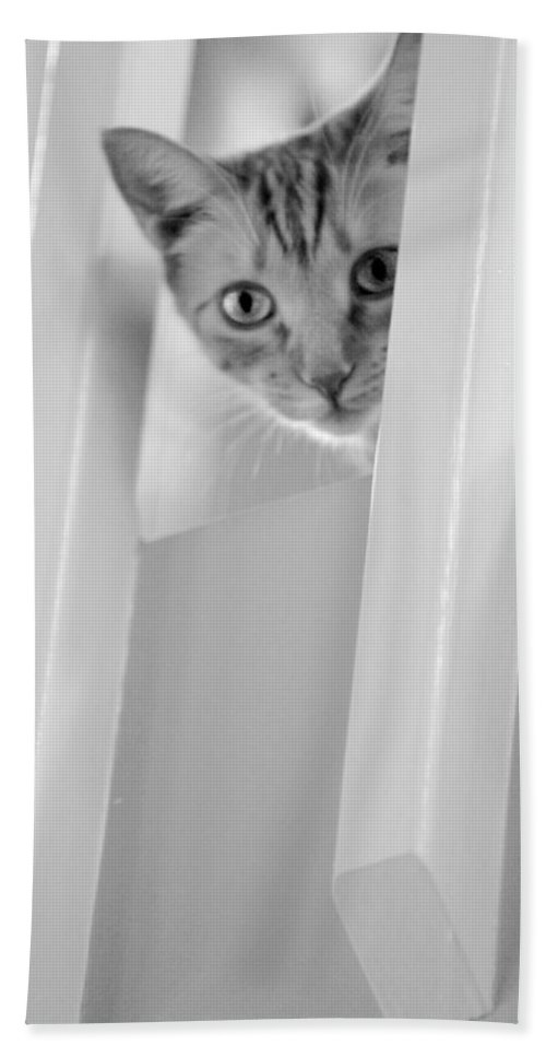 Black And White Hand Towel featuring the photograph Cat Spy Black And White by Jill Reger