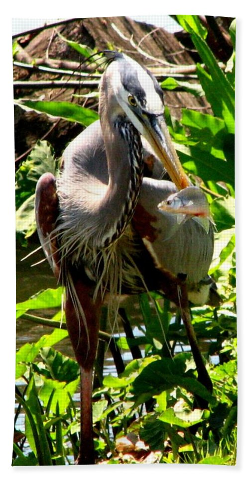 Bird Bath Sheet featuring the photograph Catch Of The Day by J M Farris Photography