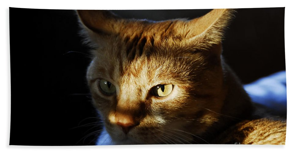 Cat.feline Bath Sheet featuring the photograph Catfish by David Lee Thompson