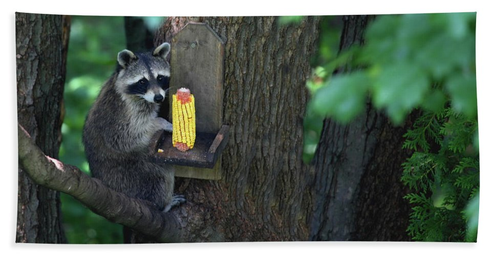Raccoon Bath Sheet featuring the photograph Caught In The Act by Karol Livote