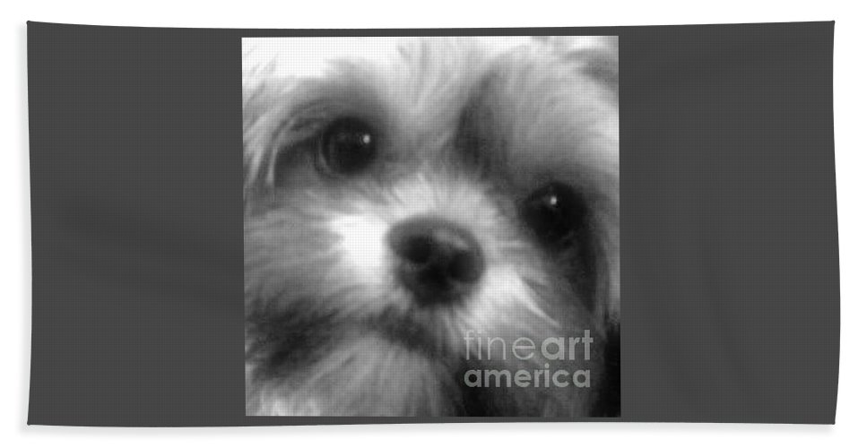 Shorkie Hand Towel featuring the photograph Cc Our Baby by Buffy Heslin