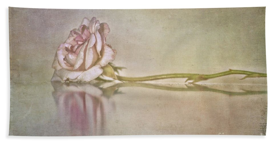 Rose Hand Towel featuring the photograph Cecile Brunner by Linda Lees