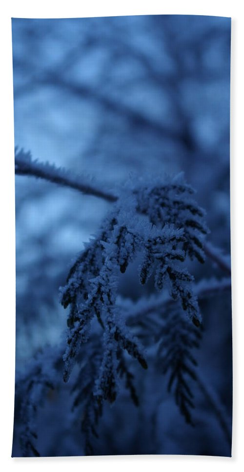 Cedar Hand Towel featuring the photograph Cedars Of Ice II by Cindy Johnston