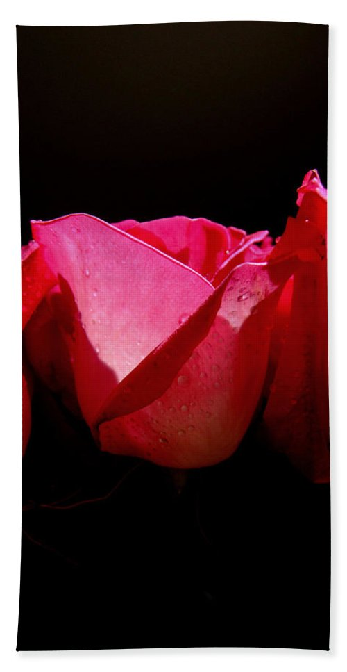 Rose Hand Towel featuring the photograph Center Of Attention by Donna Blackhall