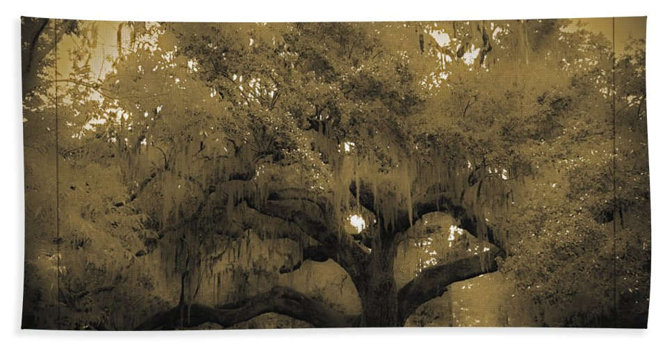Live Oak Bath Sheet featuring the photograph Centurion Oak by DigiArt Diaries by Vicky B Fuller