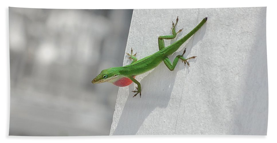 Chameleon Hand Towel featuring the photograph Chameleon by Robert Meanor