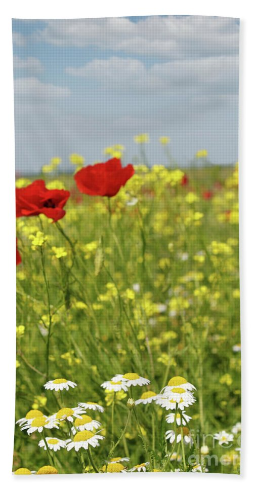 Camomile Hand Towel featuring the photograph Chamomile And Poppy Flowers Meadow by Goce Risteski