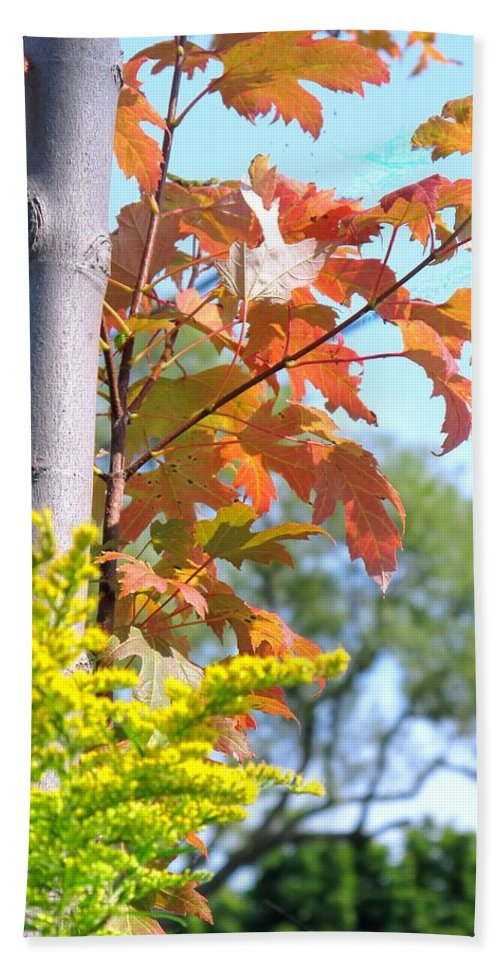 Maple Hand Towel featuring the photograph Changing Leaves by Ian MacDonald
