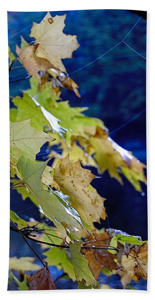Leaves Hand Towel featuring the photograph Changing Seasons by Kathleen Sartoris