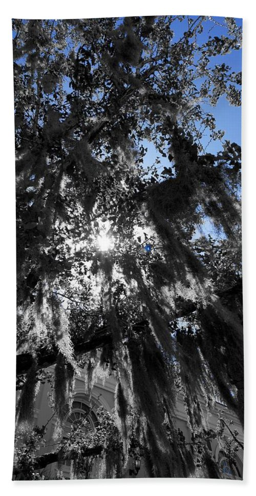 Tree Hand Towel featuring the photograph Charleston Library Green by Ivana Kovacic