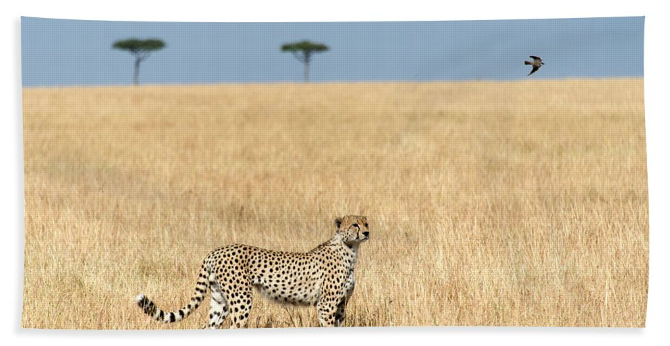 Photography Bath Sheet featuring the photograph Cheetah Acinonyx Jubatus In Plains by Panoramic Images