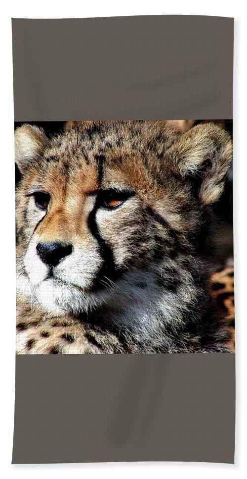 Cheetah Bath Sheet featuring the photograph Cheetah by Ellen Henneke