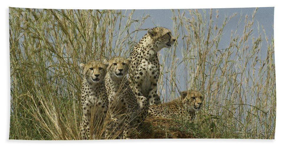 Africa Bath Towel featuring the photograph Cheetah Family by Michele Burgess